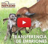 video_embriones